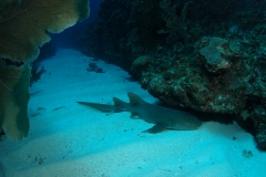aimg0746requin